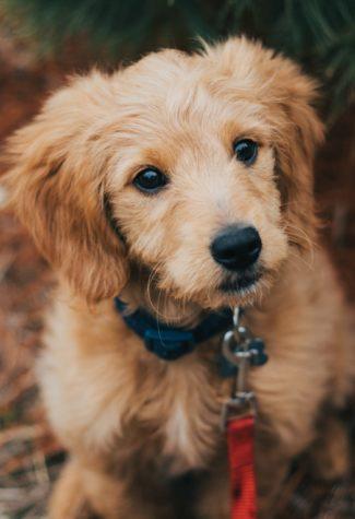 close-up-photo-of-dog-33979391
